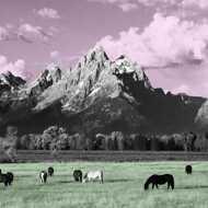 Kone - Yellowstone